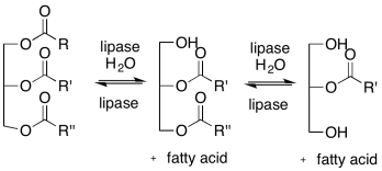 lipase equilibrium reaction