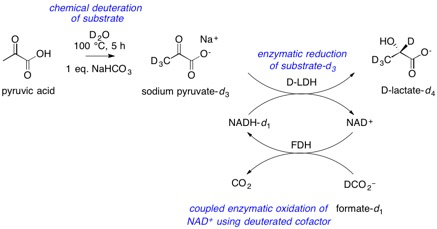 lactic acid synthesis for blog post